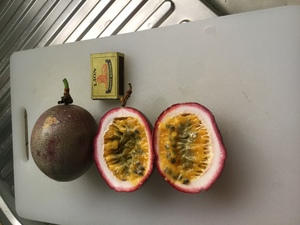 New Passion Fruit Variety