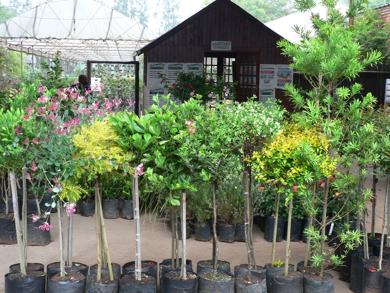 Flowering Pots and Shrubs